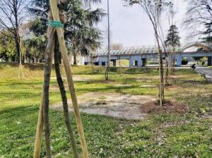 Nuove piantumazioni: 265 alberi negli ultimi 4 mesi